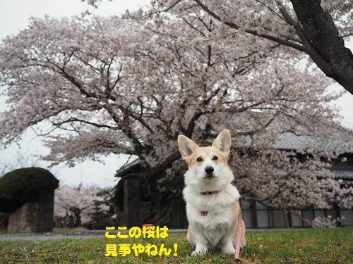 1朝日神社