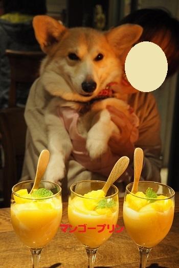 15マンゴー