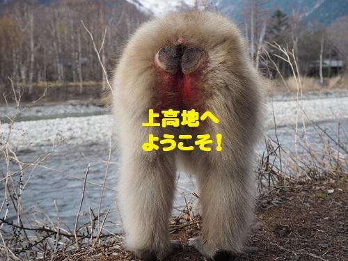 2上高地の猿