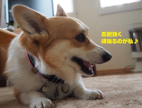 41陽菜ちゃん