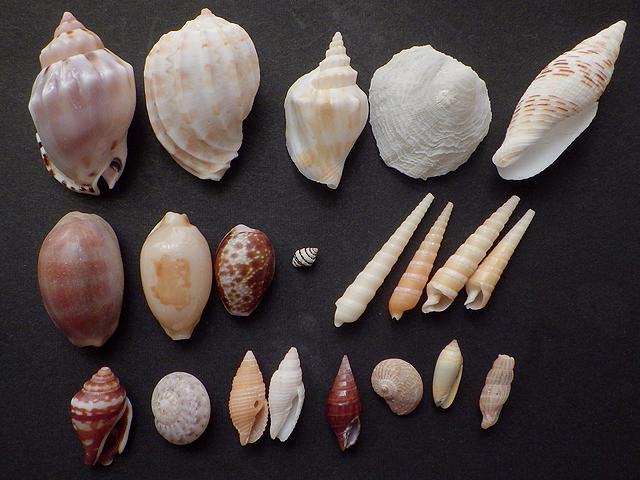 貝殻拾い結果01