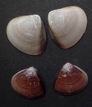 貝殻拾い結果02