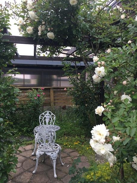 003_庭のバラ