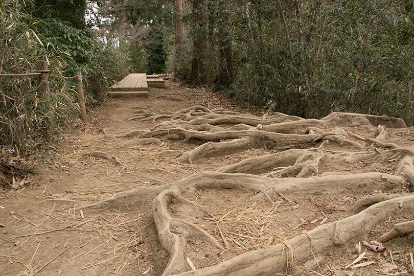 根の張る道0H7A5399