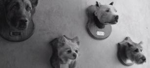roma_dogs.jpg