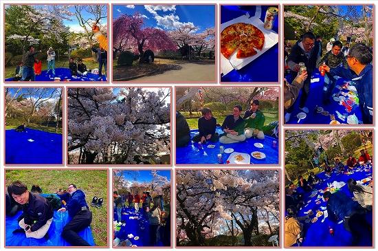 2019 お花見