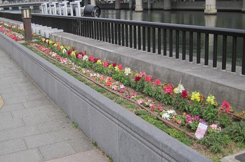 通勤途上の花壇