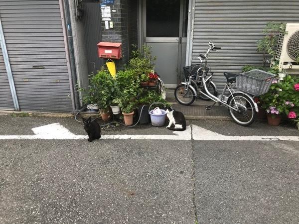 oosakakaka6.jpg