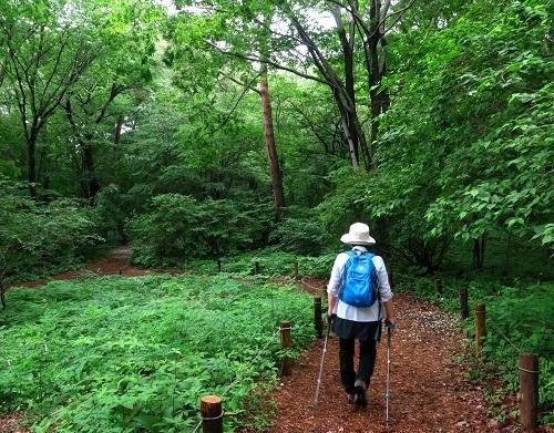 090深緑の森