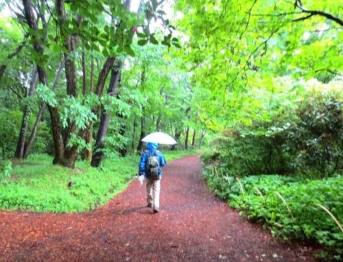 114雨の赤城自然園