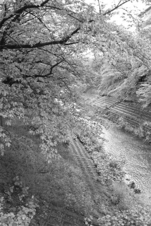 190501_sahogawa_shinryoku_01bw.jpg