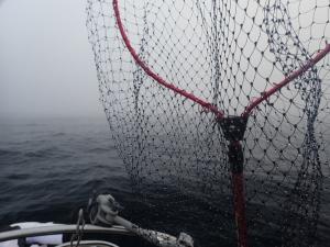 P5260002 濃霧がすごい
