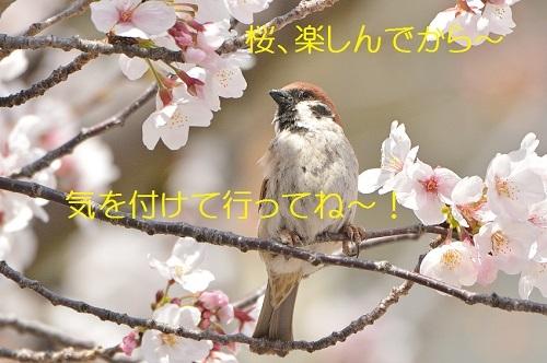 140_201904112108469b6.jpg
