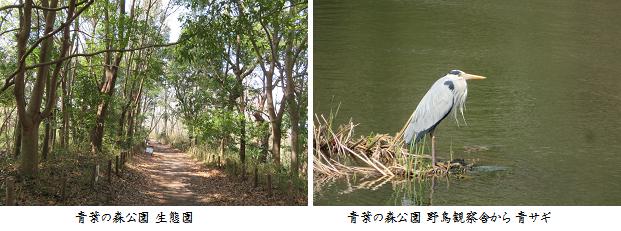 b0327-3 青葉の森公園①