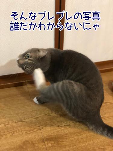 haburashi3.jpg