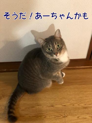 haburashi4.jpg