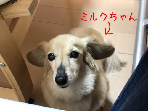 haburashi7.jpg