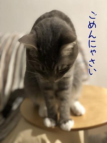 haburashi8.jpg