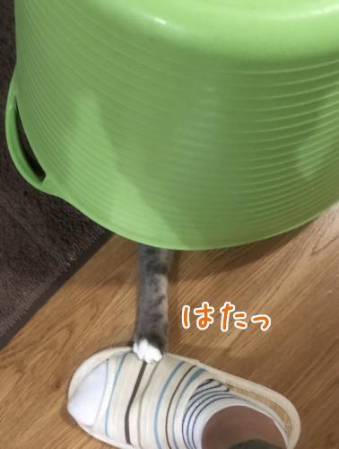 yadokari2.jpg