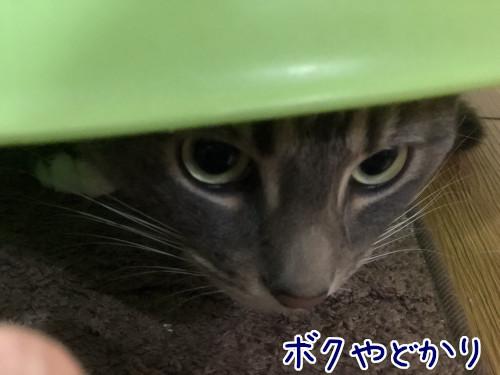yadokari4_2.jpg