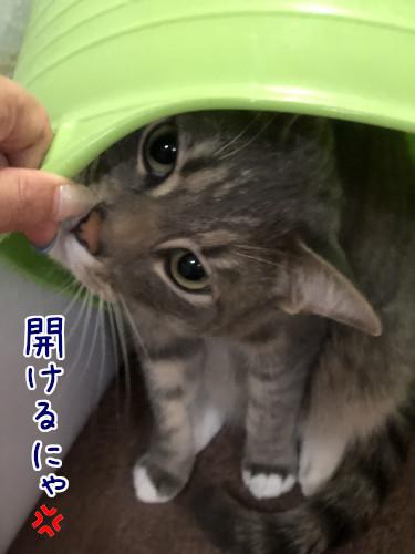 yadokari5.jpg