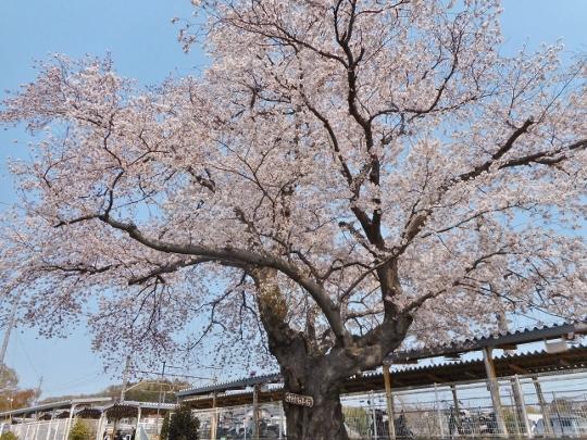 19_04_07-14wada.jpg