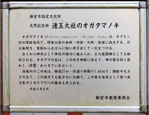 190411hayatama36.jpg
