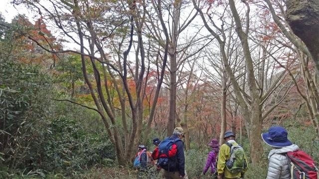 15天園ハイキングコースの紅葉1
