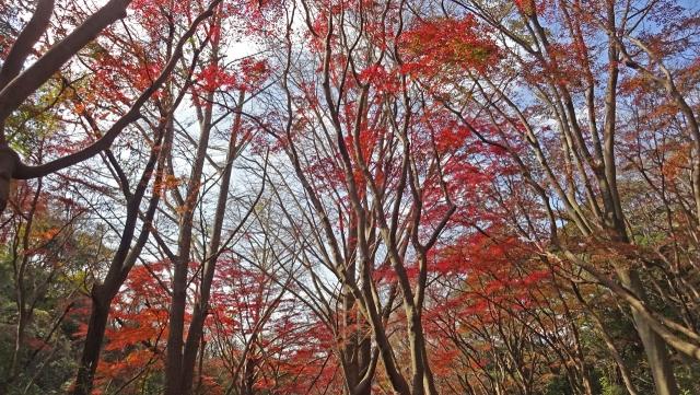 16天園ハイキングコースの紅葉2