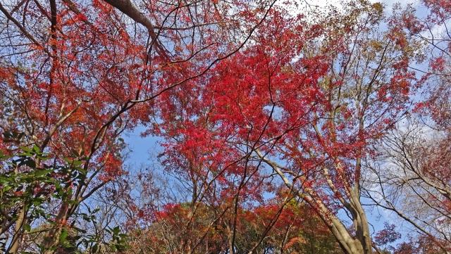 17天園ハイキングコースの紅葉3