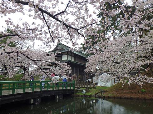 弘前城桜まつり2019-1