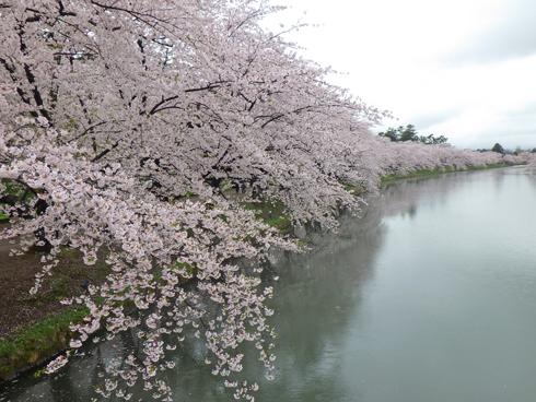 弘前城桜まつり2019-3