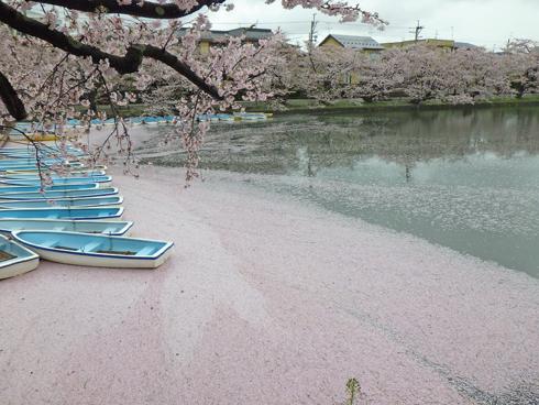 弘前城桜まつり2019-5