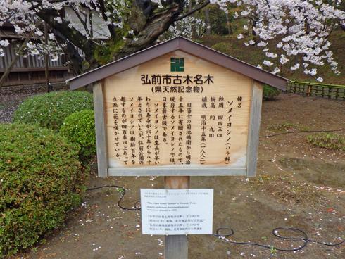 弘前城桜まつり2019-8