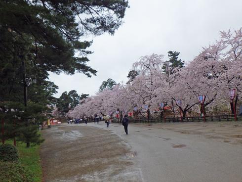 弘前城桜まつり2019-11