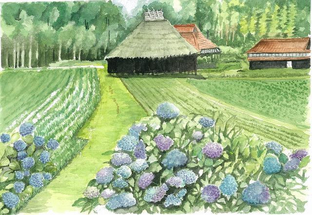 s-紫陽花と物置小屋
