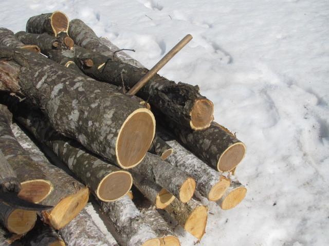 木こり作業 002