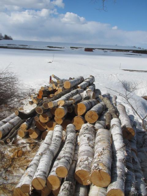 木こり作業 004
