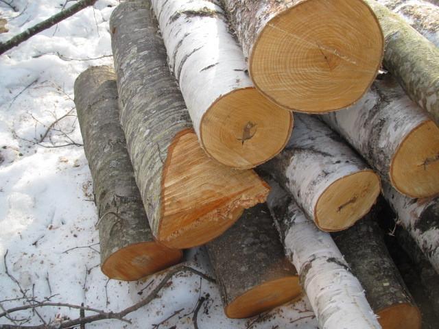 木こり作業 005