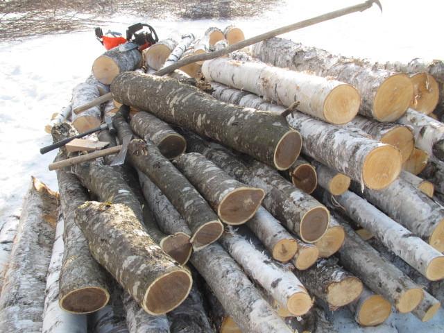 木こり作業 007