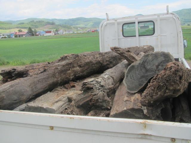 埋れ木運搬 001