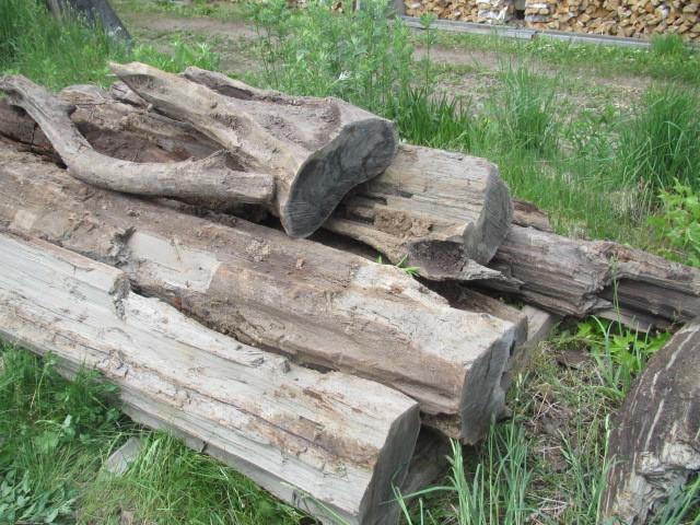 埋れ木運搬 004