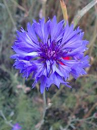 大好きな紫の花♪