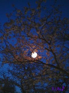 四日市海蔵橋夜桜その1