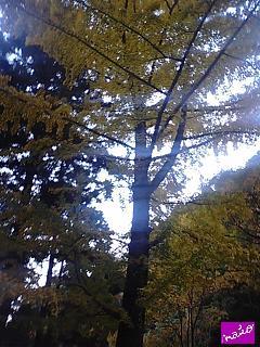 なんだか好きな木♪