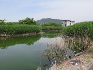 [近江]木村城/01常浜公園.jpg