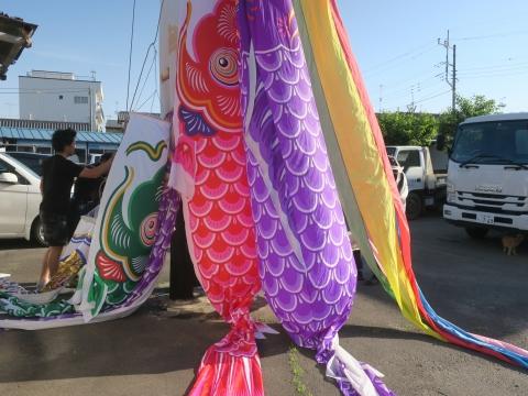 「戸井田家27年目の鯉のぼり」③