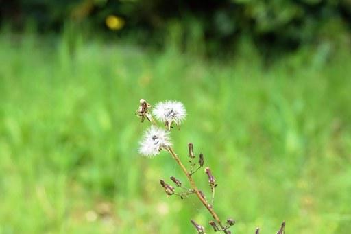 野草季節-d DSC05455