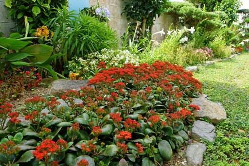 庭園-c DSC08400