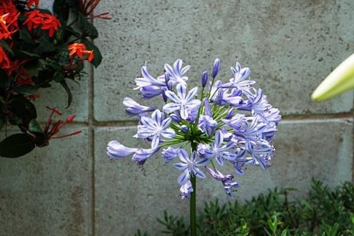 庭園-f DSC08444